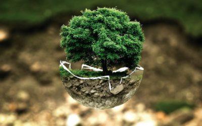 Sukcesy na Olimpiadzie Wiedzy Ekologicznej